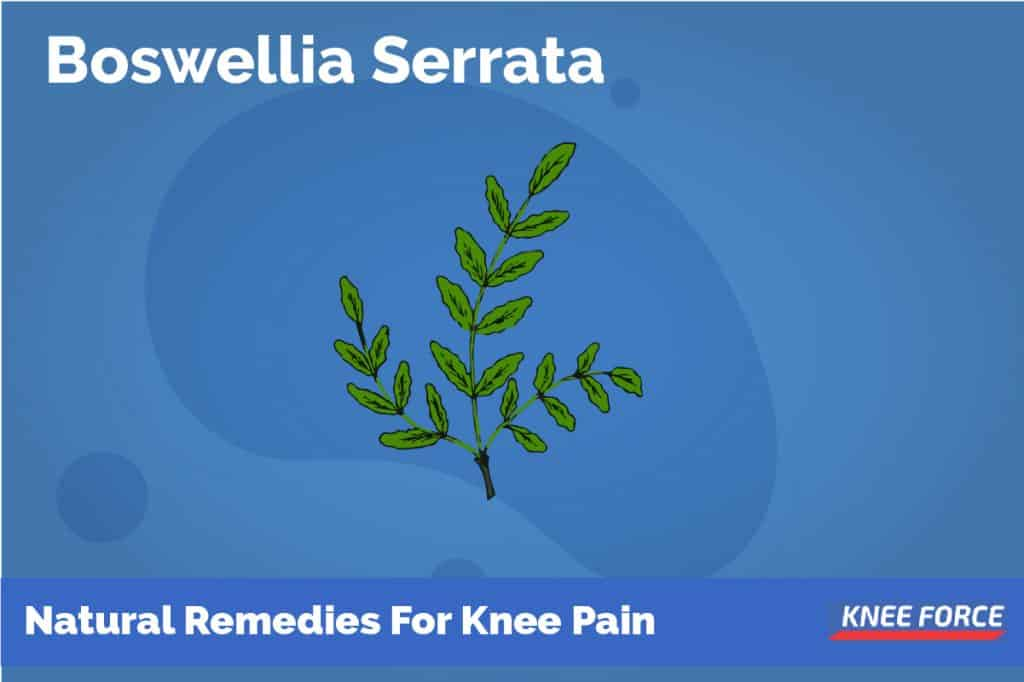 Boswellia Serrata Possesses Several Compounds That Act As An Inhibitor To Inflammation